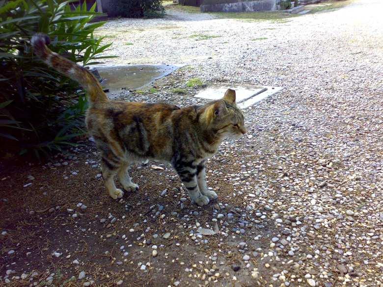 pasqualini gatto (2)
